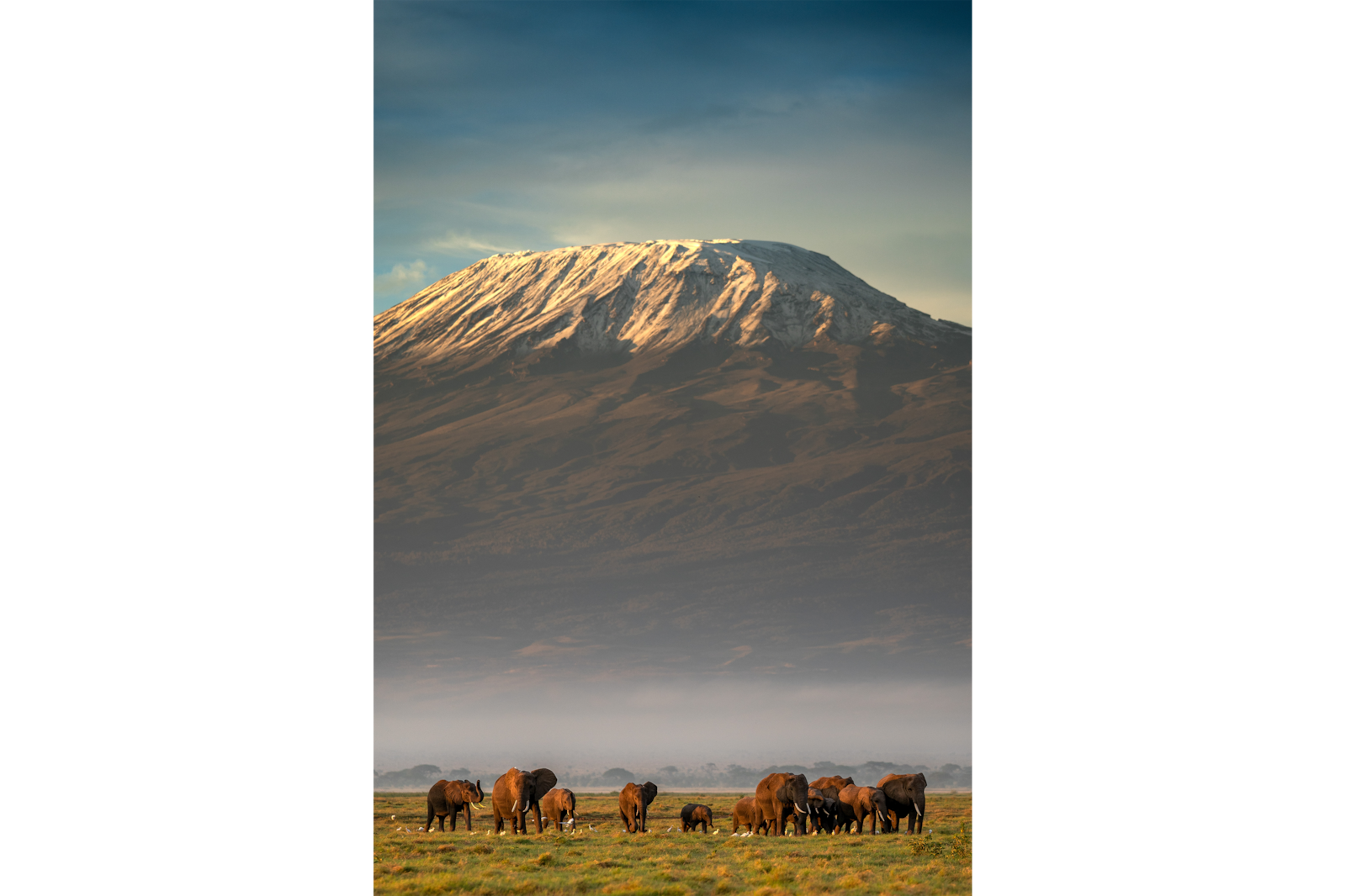 elephants with mt kilamanjaro alpha 7RIII