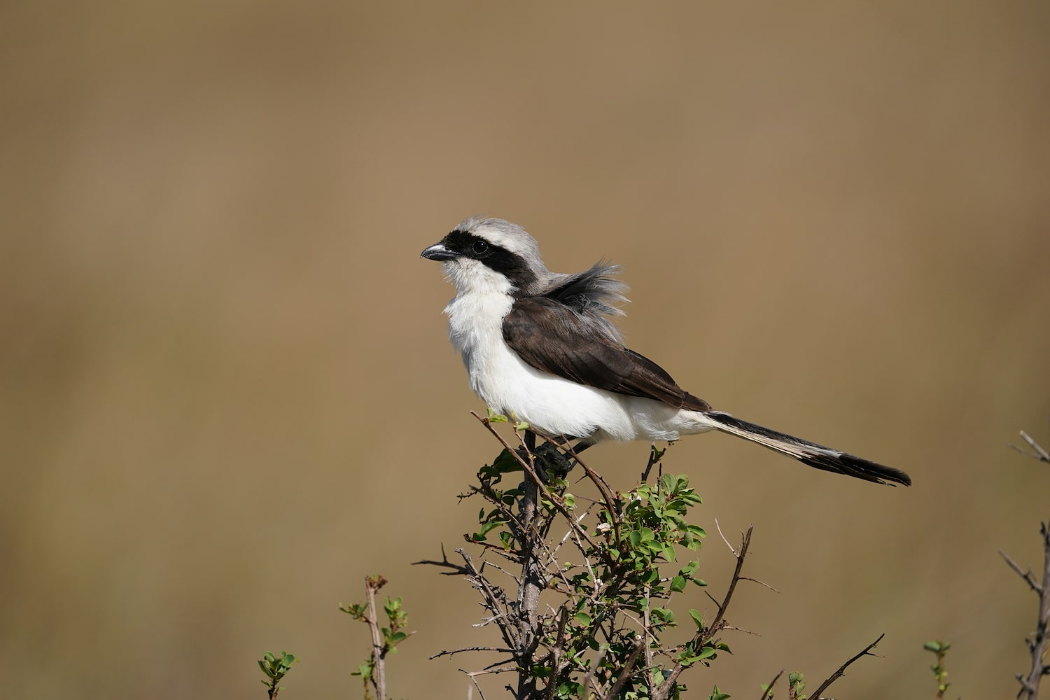 tiny-black-and-white-bird-on-plant-alpha-7III